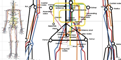 human_subway_map