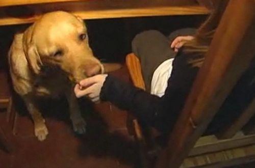 Câinii depistează și diabetul, nu numai cancerul