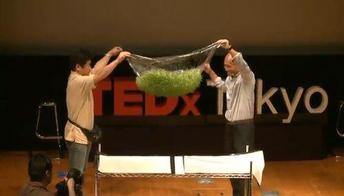 Plante care cresc în folie, pe beton sau în spațiu