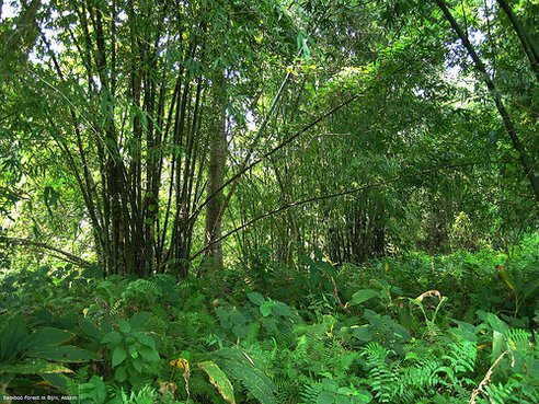 Un indian a creat singur o pădure de peste 550 de hectare, în 30 de ani