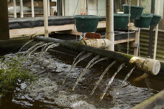 Ofensiva aquaculturii: Pescării pe acoperişurile de bloc din Germania
