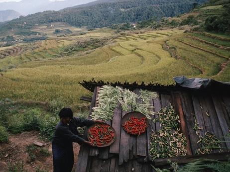 Bhutan vrea să devină prima ţară din lume cu agricultură 100% organică