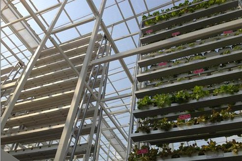 Grădinile verticale sunt un succes în Singapore