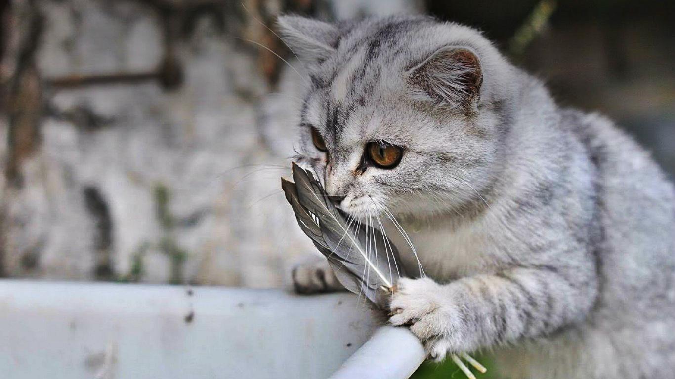 Noua Zeelandă Facebook: Campanie Pentru Exterminarea Pisicilor Din Noua Zeelandă