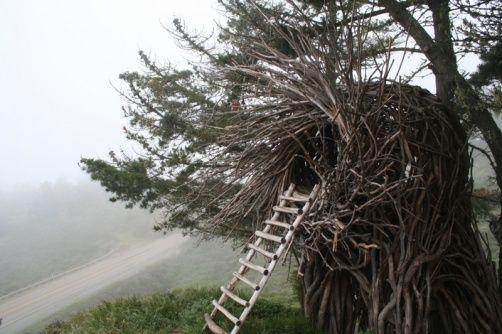 human-nest4