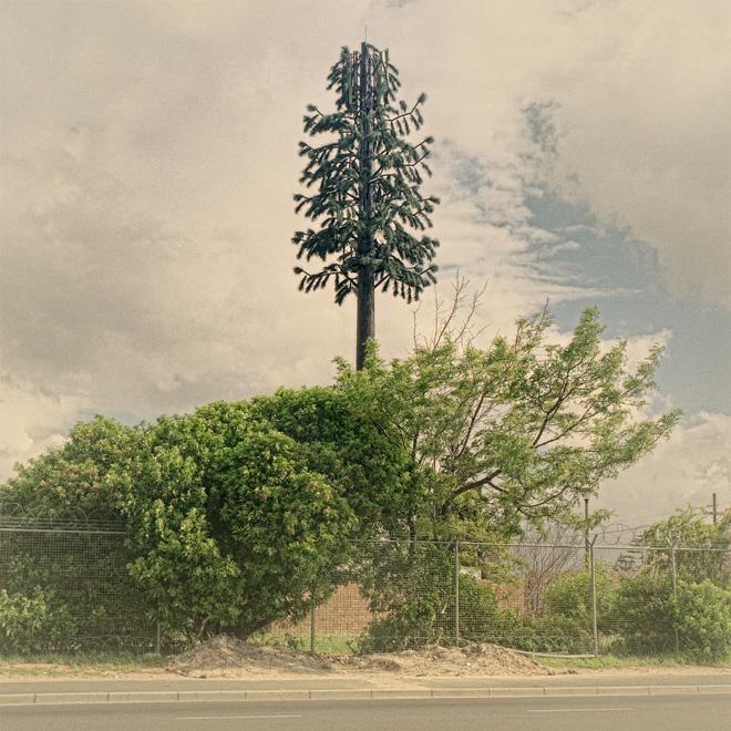 Invasive-Species-07