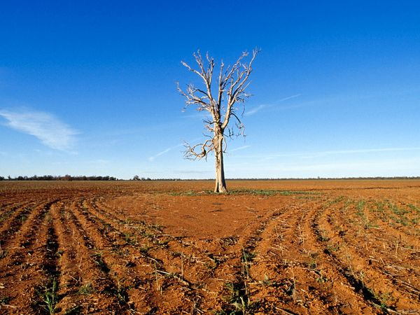 climate-drought-tree_13081_600x450