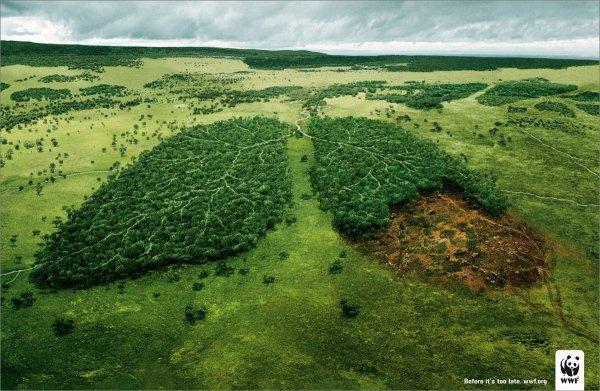 Plaman verde WWF