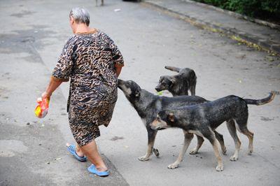 europa-speriata-de-cainii-maidanezi-din-bucuresti-avertismentul-celor-de-la-uefa-pentru-strainii-care_size1