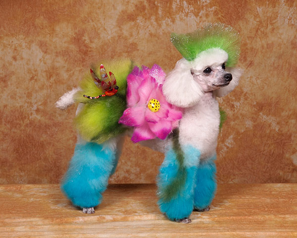 Crazy Dog Grooming Competition