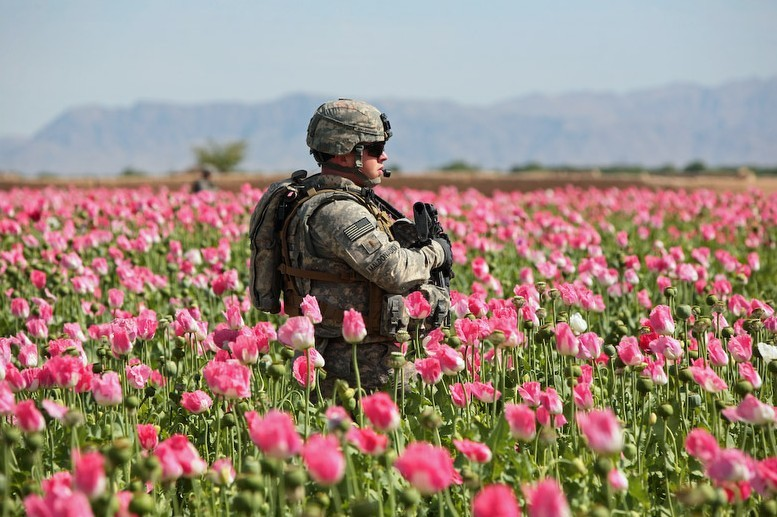 patrolling-poppies