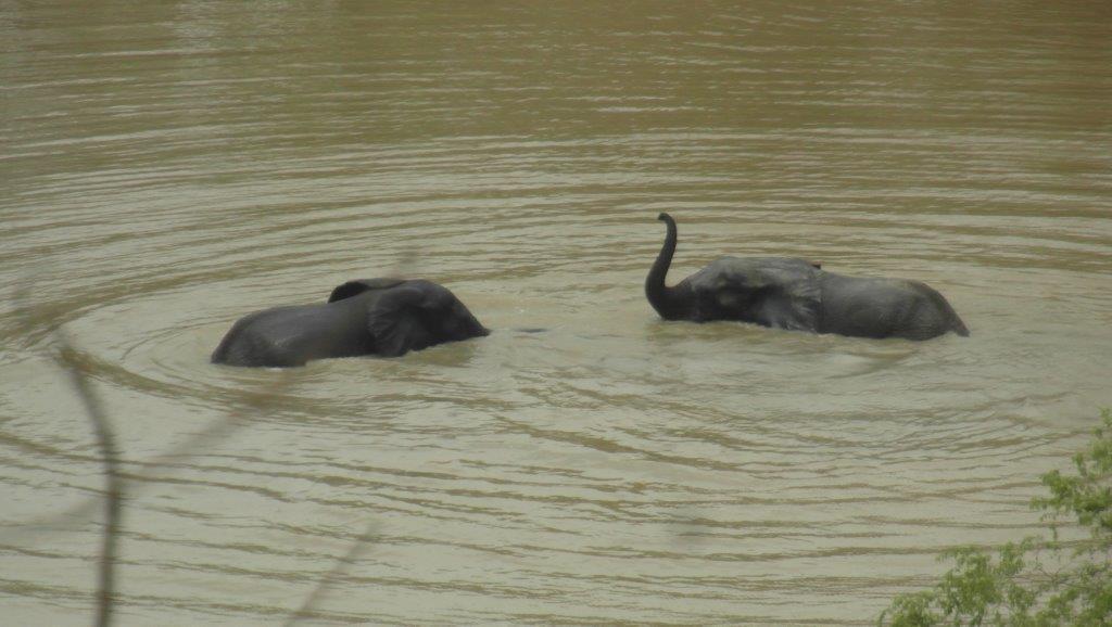 Elefanti in apa 2