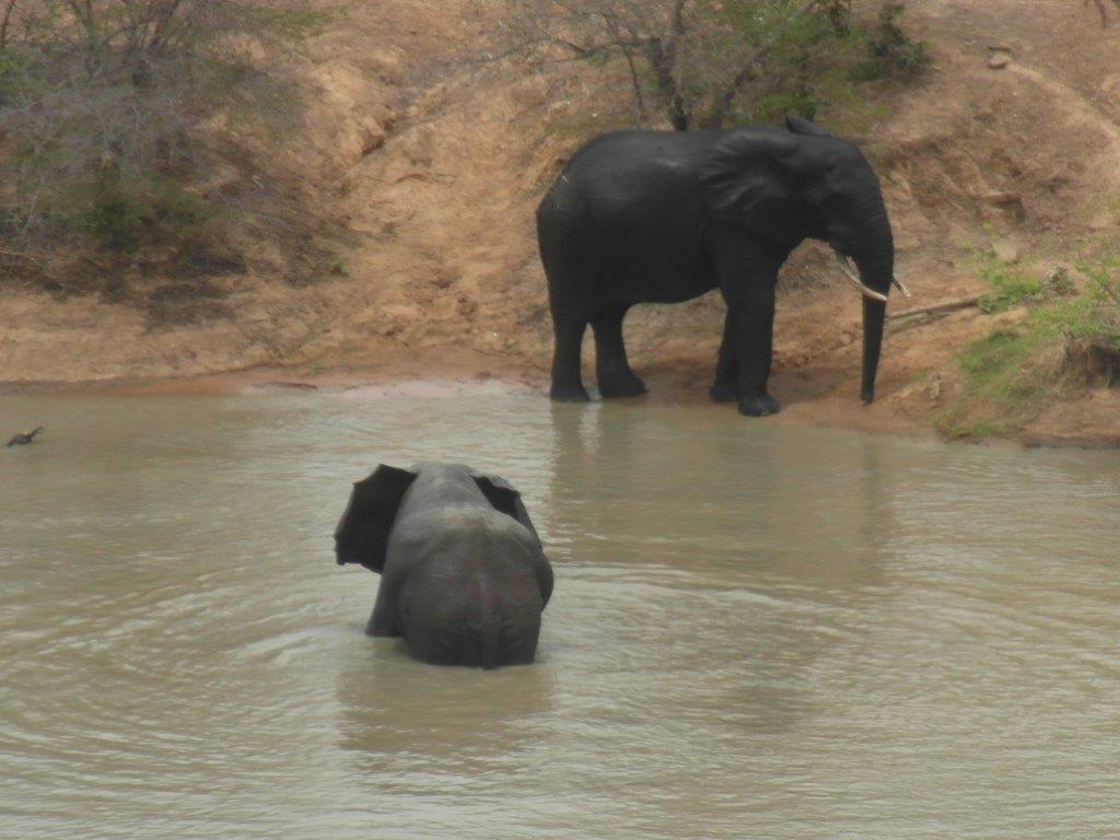 Elefanti in apa