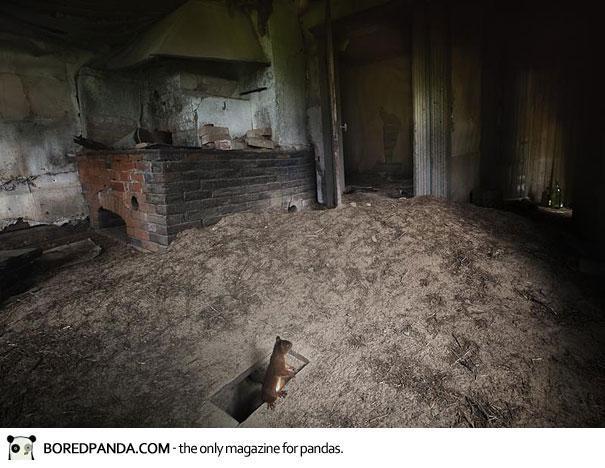abandoned-house-animals-kai-fagerstrom-12