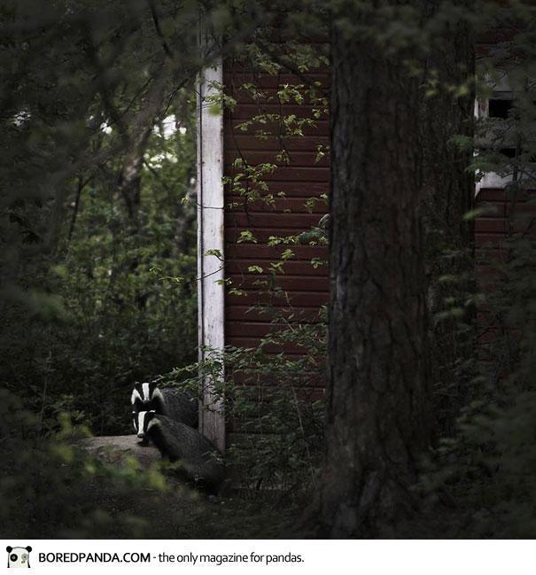 abandoned-house-animals-kai-fagerstrom-16