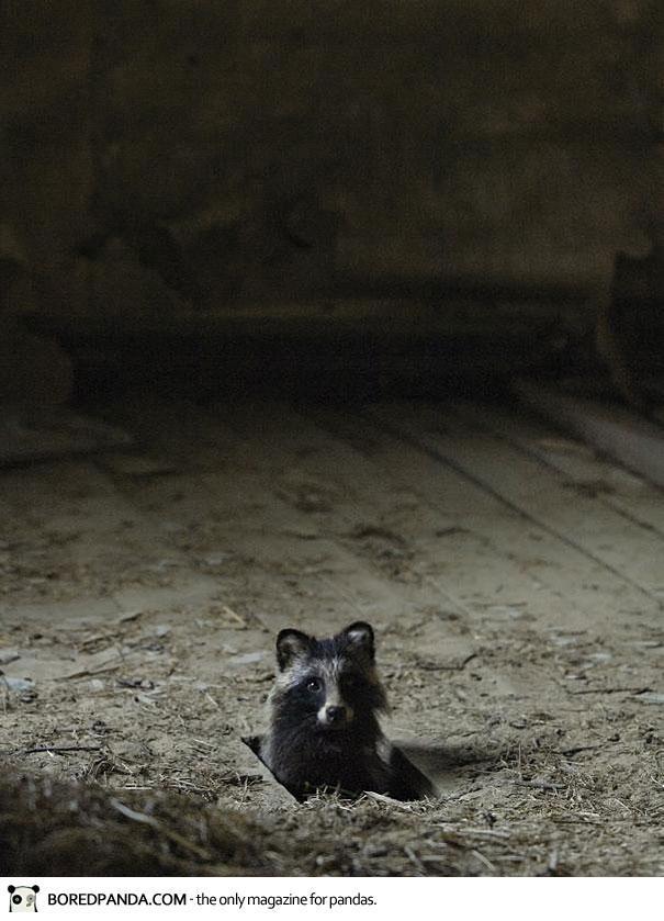 abandoned-house-animals-kai-fagerstrom-17