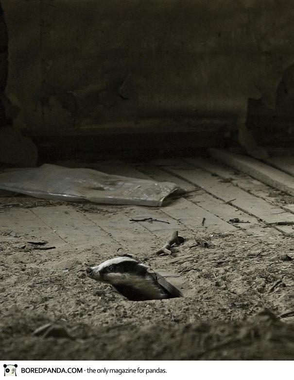 abandoned-house-animals-kai-fagerstrom-18