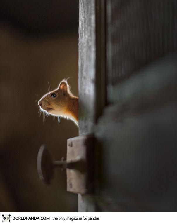 abandoned-house-animals-kai-fagerstrom-34
