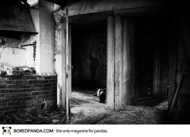 abandoned-house-animals-kai-fagerstrom-35