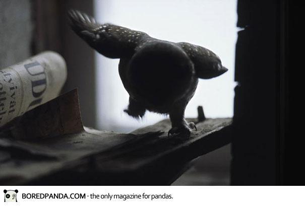 abandoned-house-animals-kai-fagerstrom-4
