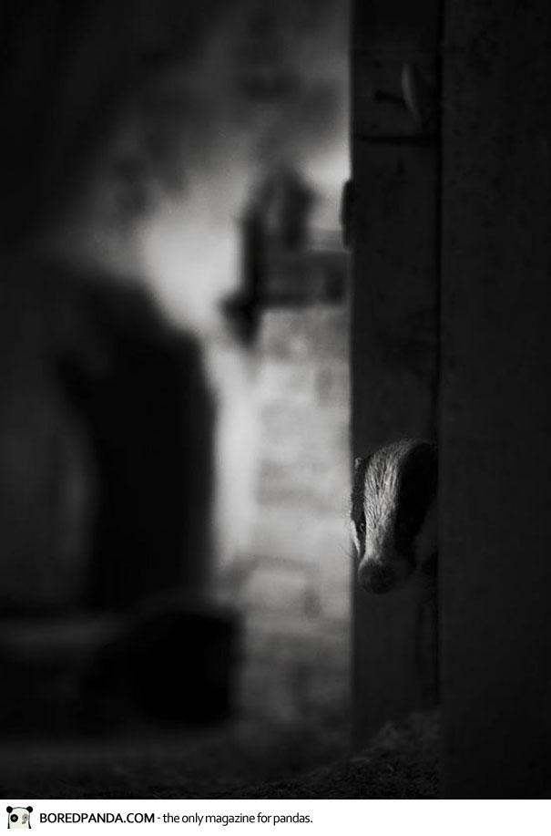 abandoned-house-animals-kai-fagerstrom-8