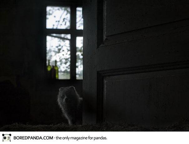 abandoned-house-animals-kai-fagerstrom-9