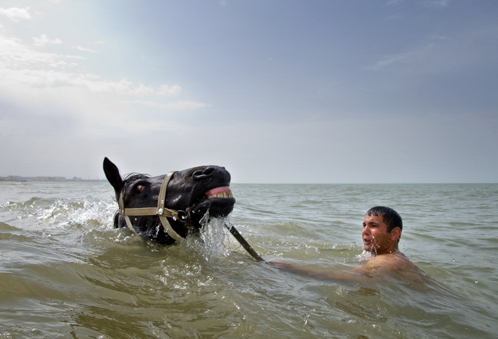A man is cooling down his horse on a hot day,Caspian Sea, Sumgait public beach