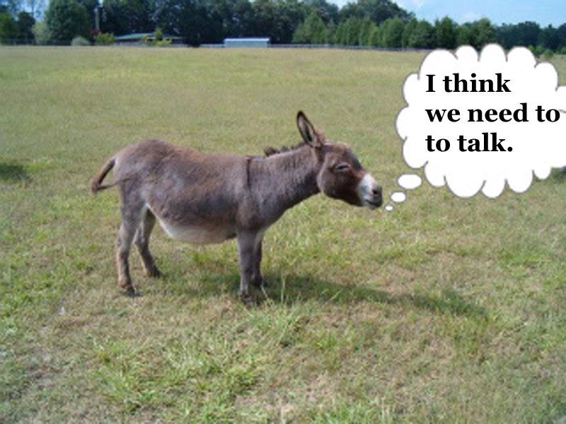 1-animal talk