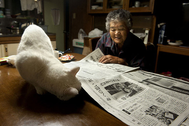 grandmother-and-cat-miyoko-ihara-fukumaru-16