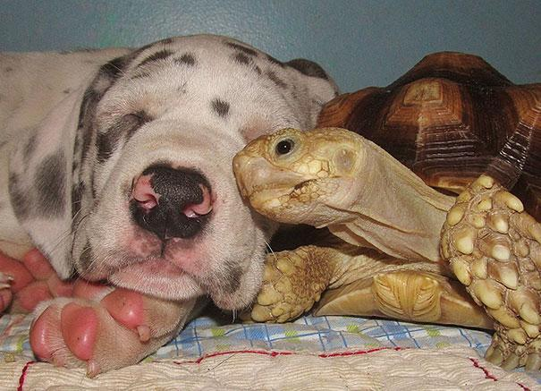 animal-friendship-at-rocky-ridge-refuge-42