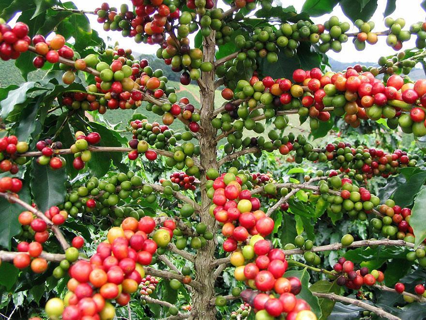 V-ati intrebat cum arata initial fructele exotice pe care le cumparati ? Interesant, priviti !