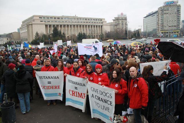 Protest 8 martie_VIER PFOTEN