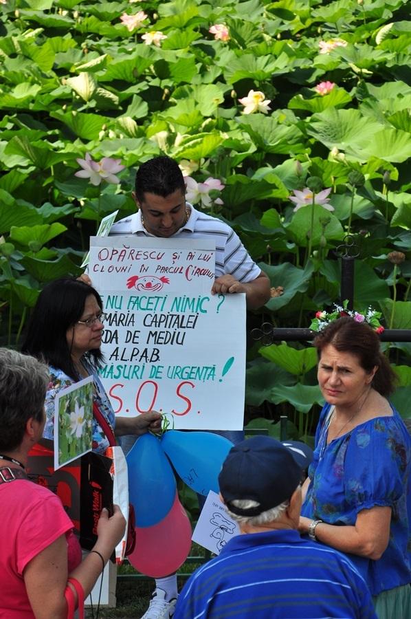 protest vara 2013