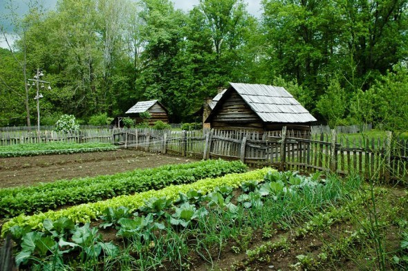 gardening_for_self_sufficiency