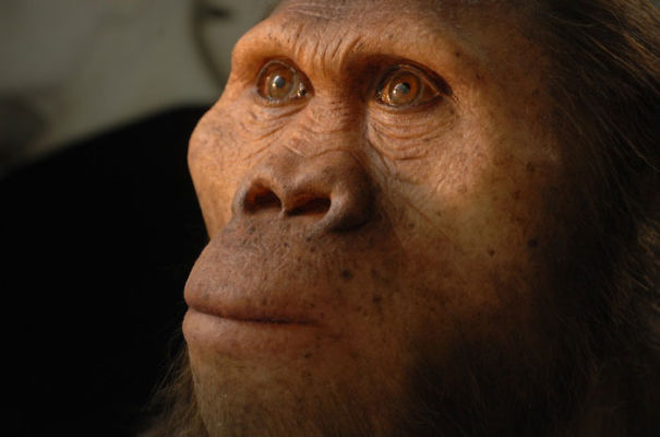 Amazingly-realistic-reconstructions-of-our-ancectors-shows-human-evolution5__605