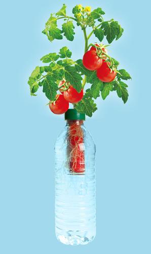 3031085-slide-i-tomatobottle