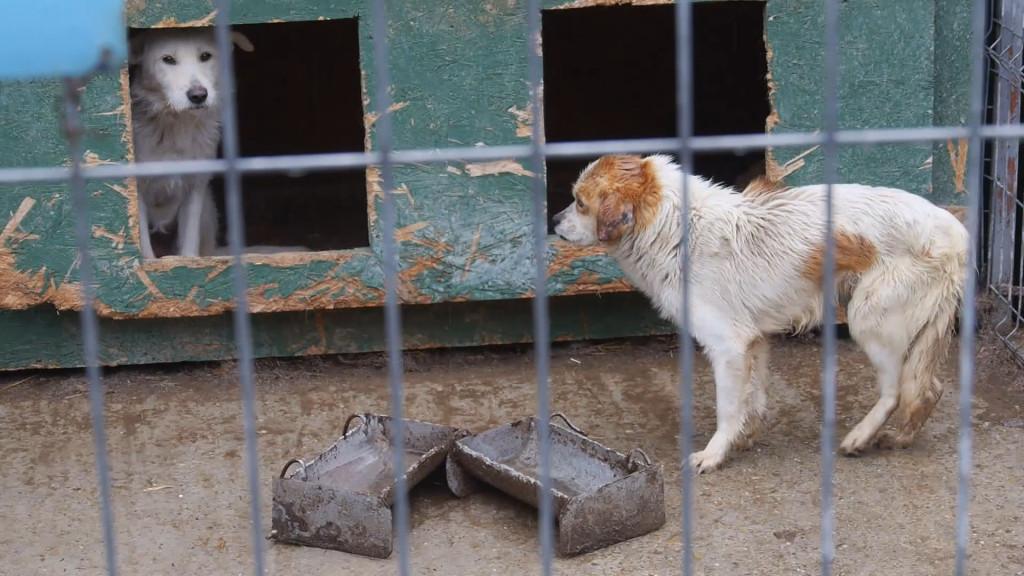 Public Dog Shelter RO 2014