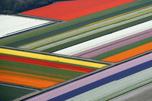 Blooming tulips field - The Most Amazing Places On Earth