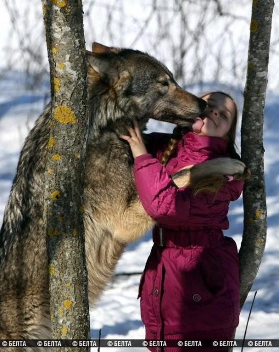 stire 21 aug lupi 3