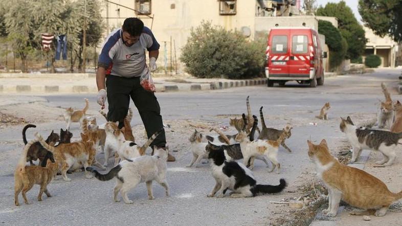 Alaa, an ambulance driver, feeds cats in Masaken Hanano in Aleppo