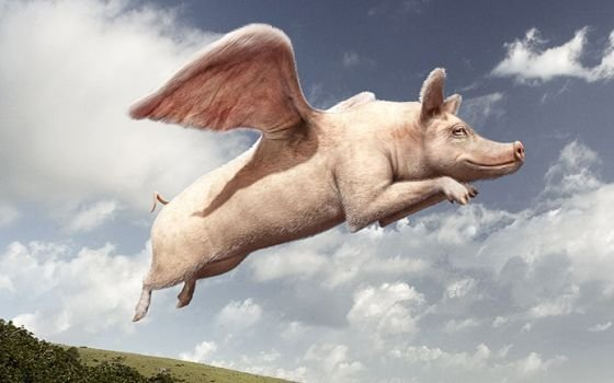 22758_fullimage_flying_pig_560x350