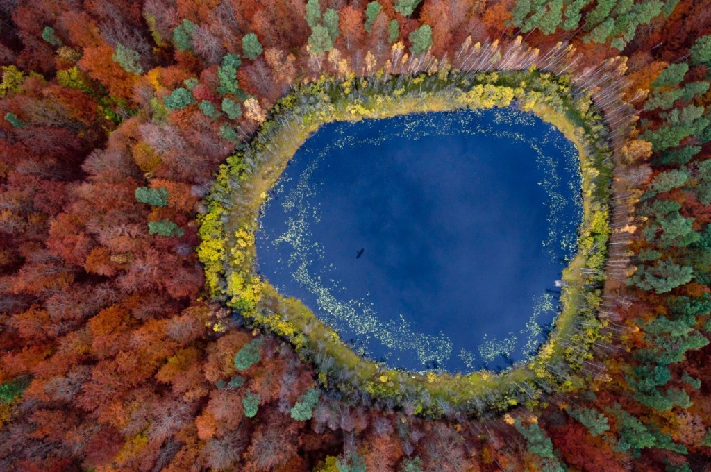 Autumn in Pomerania, north side of Poland. Forest located in Region of Kashubia.