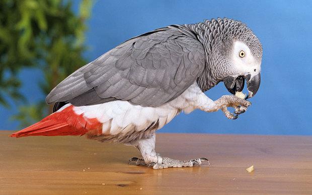 parrot_3071664b