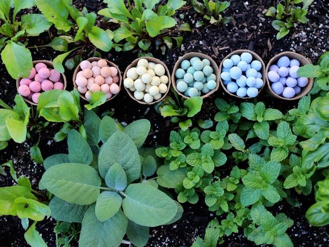 Seedles-Rainbow-Colors-Classroom-Kit.jpg.662x0_q100_crop-scale