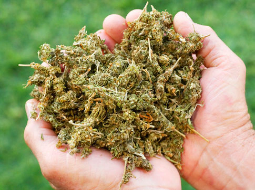alg-marijuana-jpg