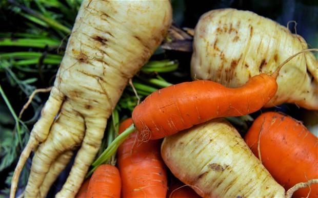 carrot_2353469b
