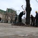 VIDEO Cum s-au solidarizat locuitorii din Iaşi împotriva tăierii teilor