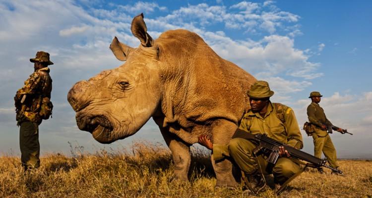 northern-white-rhino-750x400