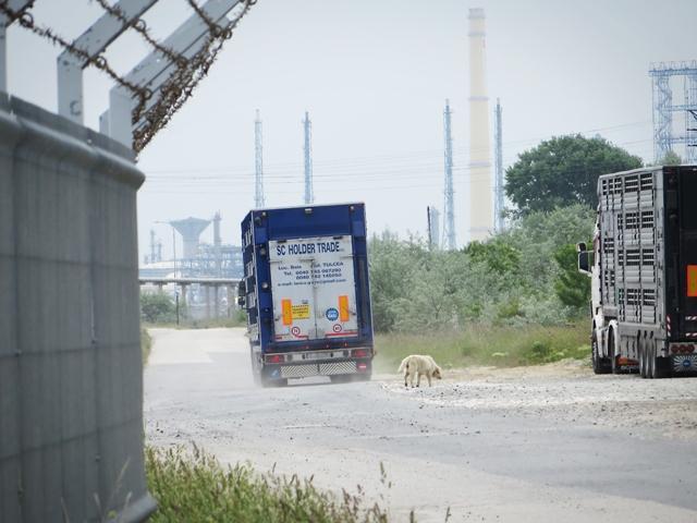 Livestock Transport 2015