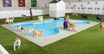 3048832-slide-s-1-check-out-the-worlds-first-airport-terminal-for-pets